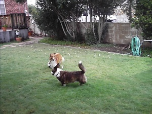 PJ and Bella playing soccer?