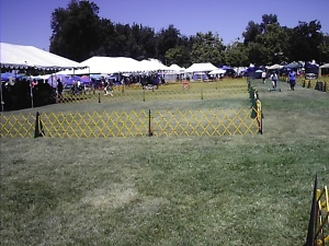 A view from the far side of the field