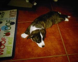 puppy-pix-268