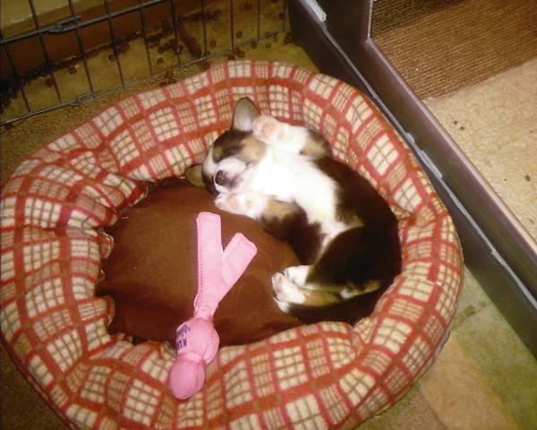 sleeping-bubba-001