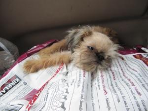 sleeping flea 2