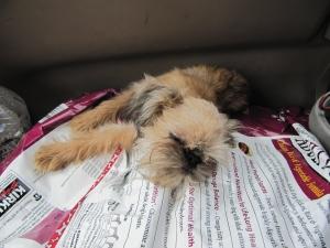 sleeping flea