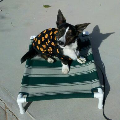 Fifi rockin' her Howloween costume.