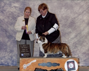 Best of Breed - Hobbs Kennel Club